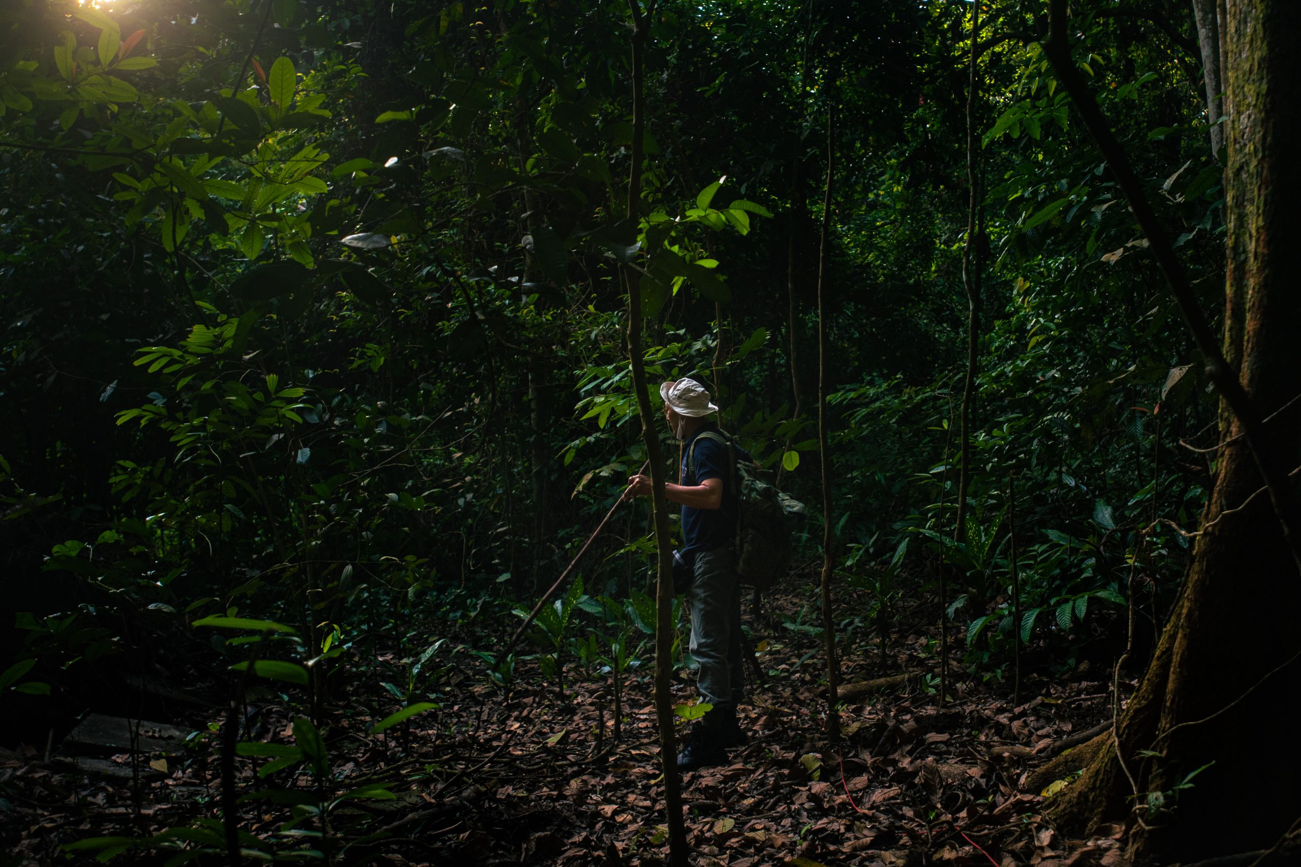 Off The Beaten Track: A Morning In The Woods With A Durian Picker