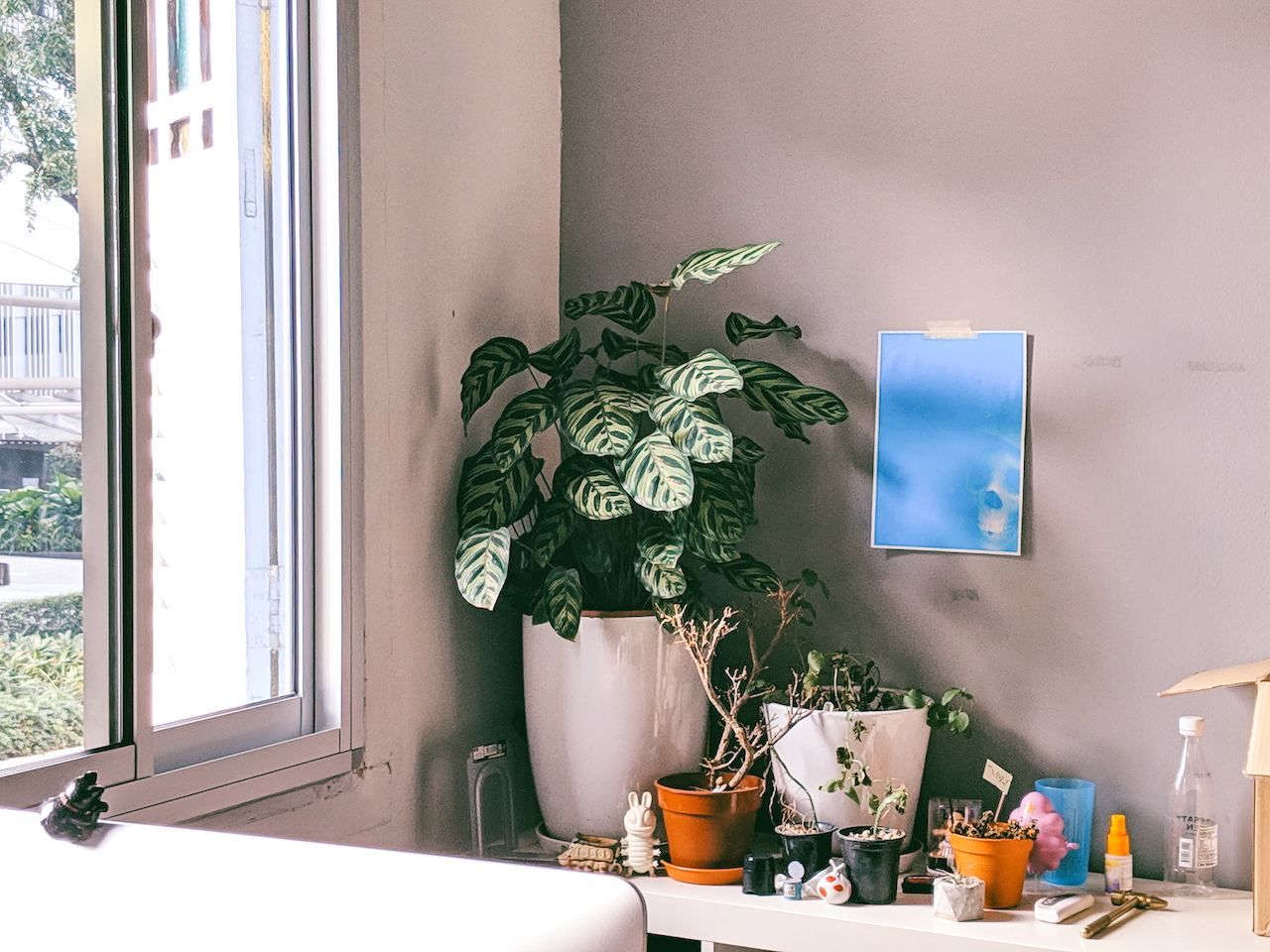 Millennials are Obsessed With Plants, and We're Not Apologising For It