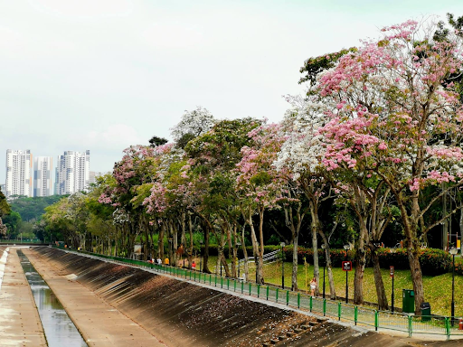Why Is It So Hard to Believe That Singapore Can Be Beautiful?